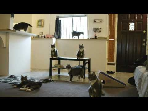 Harlem Shake Rambo The Cat Edition (Original)